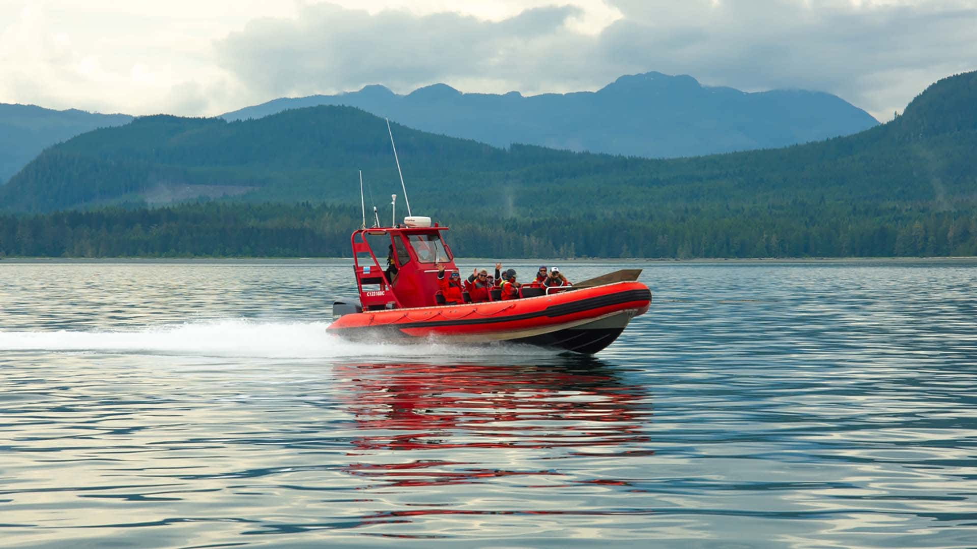 Whale Watching Boat Tours