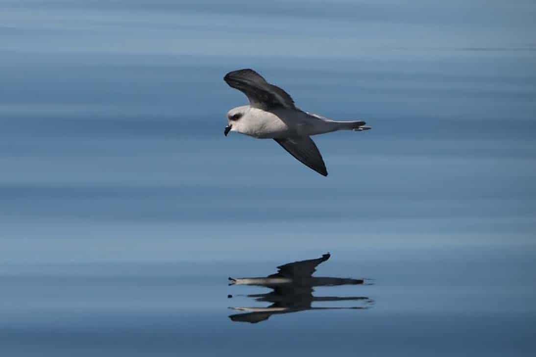 Vancouver Island Birding Tours