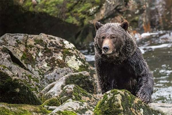 Whales, Otters, & Grizzly Bear Tours